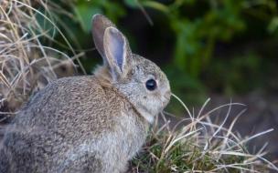 Fondo de pantalla conejo asustado