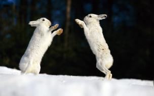 Fondo de pantalla conejos saltando