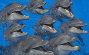 Fondo de pantalla delfines con hambre
