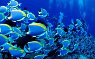 Fondo de pantalla cardumen de peces azules