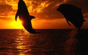 Fondo de pantalla delfines saltando en la noche