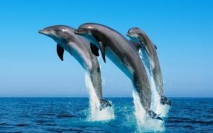 Fondo de pantalla delfines saltando en el mar