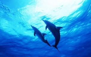 Fondo de pantalla par de delfines