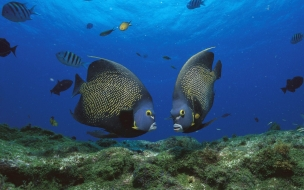Fondo de pantalla peces enamorados