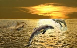 Fondo de pantalla delfines jugando