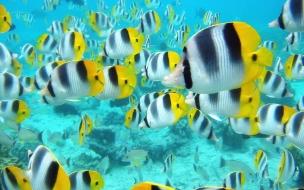 Fondo de pantalla cardumen de peces coloridos