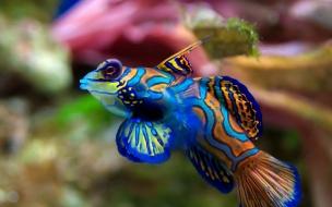 Fondo de pantalla pescado colorido
