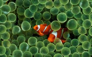 Fondo de pantalla pescados anaranjado