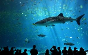 Fondo de pantalla tiburon en acuario