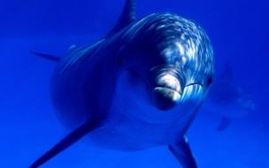 Fondo de pantalla delfin