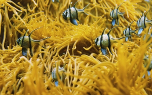 Fondo de pantalla peces en arrecife