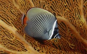 Fondo de pantalla pez hermoso