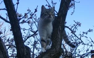 Fondo de pantalla gato en un arbol