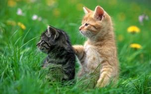 Fondo de pantalla gatos parados