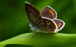 Fondo de pantalla mariposa con ojos