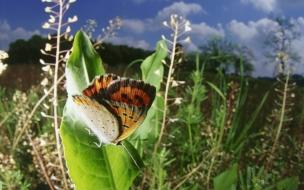 Fondo de pantalla mariposa posando