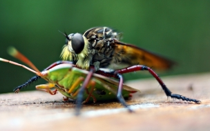 Fondo de pantalla mosquito grande