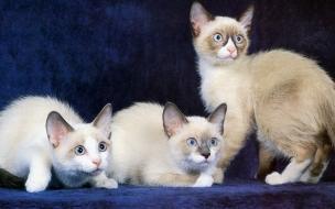 Fondo de pantalla gatos asustados