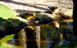 Fondo de pantalla pajaritos cerca del agua