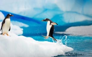 Fondo de pantalla pinguinos jugando