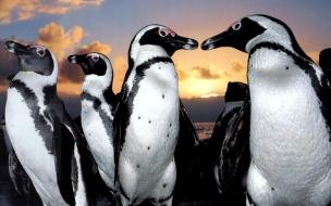 Fondo de pantalla pareja de pinguinos