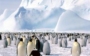 Fondo de pantalla pinguinos observando