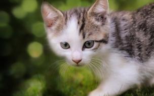 Fondo de pantalla gato solo