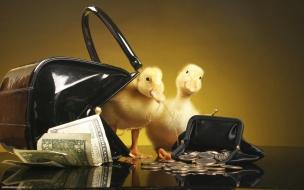 Fondo de pantalla patitos con dinero