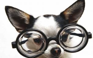 Fondo de pantalla perro con grandes lentes