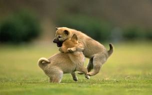 Fondo de pantalla perros jugando