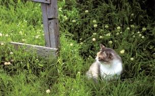 Fondo de pantalla gato curioso