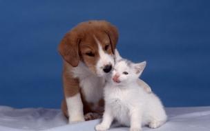 Fondo de pantalla perro abrazado a un gato