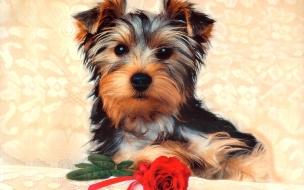 Fondo de pantalla perro con una flor
