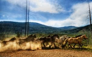 Fondo de pantalla carrera de caballos