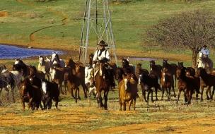 Fondo de pantalla manada de caballos
