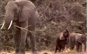 Fondo de pantalla elefanta con sus 2 hijos