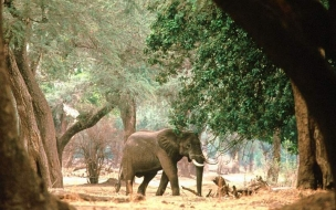 Fondo de pantalla elefante buscando comida