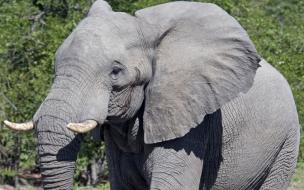 Fondo de pantalla elefante bebe solo