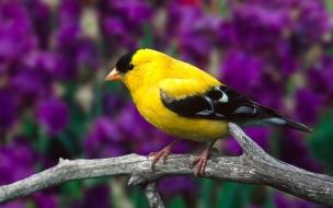 Fondo de pantalla de ave en rama amarilla