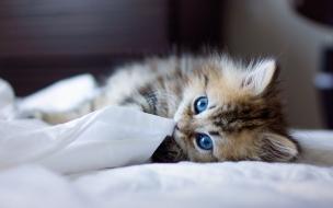 Fondo de pantalla gatito acostado jugando