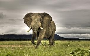 Fondo de pantalla elefante huyendo