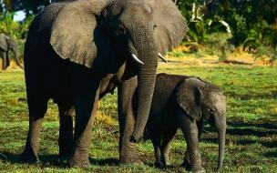 Fondo de pantalla elefantes caminando