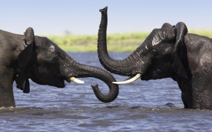 Fondo de pantalla elefantes jugando