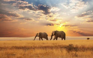 beautiful landscape with elephants in the distance wallpaper