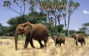 Fondo de pantalla elefanta con sus hijos