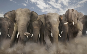 Fondo de pantalla carrera de elefantes