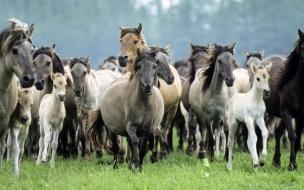 Fondo de pantalla caballos corriendo
