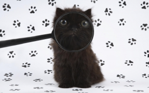 Fondo de pantalla gato con lupa