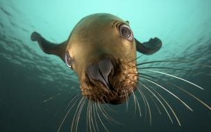 Fondo de pantalla foca en el mar