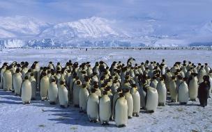 Fondo de pantalla pinguinos en reunion